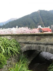 10-ZQN-Cherry-Blossom-the-creek