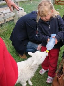 20-ZQN-Tss-feed-the-lamb